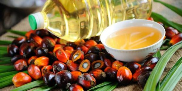 exporter of Palm Oil in USA