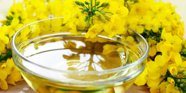 rapeseed oil exporters and suppliers