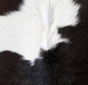 cow skin suppliers