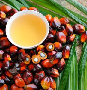supplier of Palm Oil