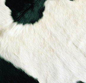 cow skin suppliers near me